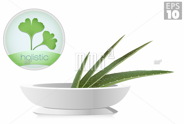Aloe and ginkgo biloba plants, holistic icons, alternative medic